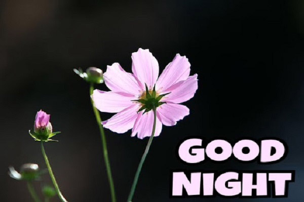 good night with flower