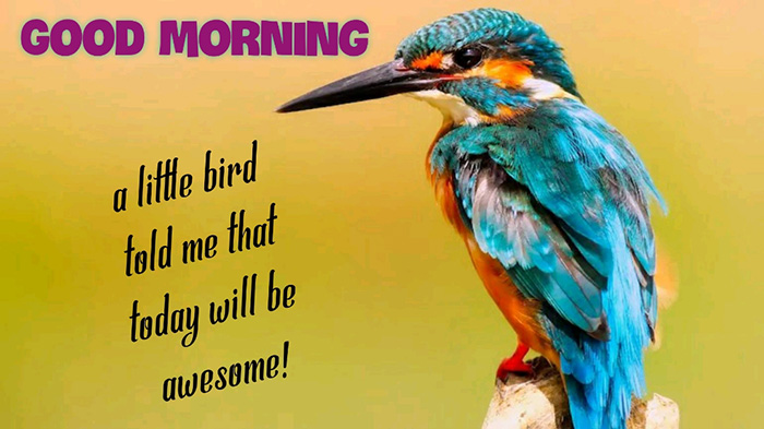 good morning a little bird