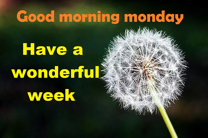 good morning monday have a wonderful week
