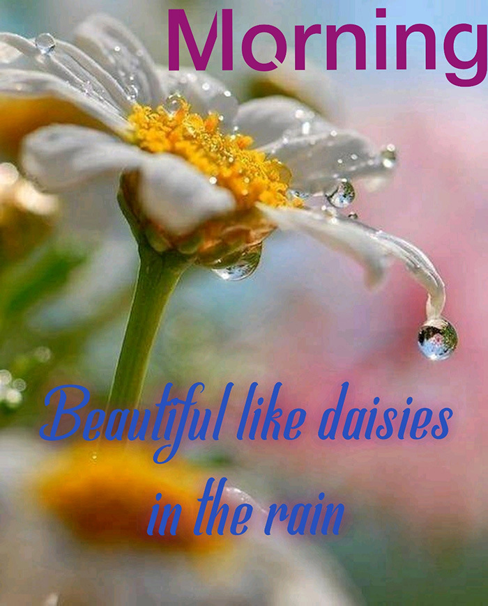 morning beautiful like daisies in the rain