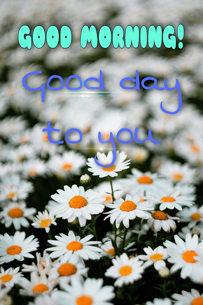 good-morning-good-day-to-you