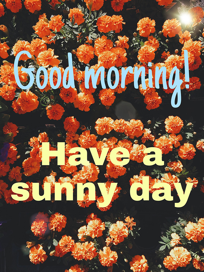 good morning have a sunny day