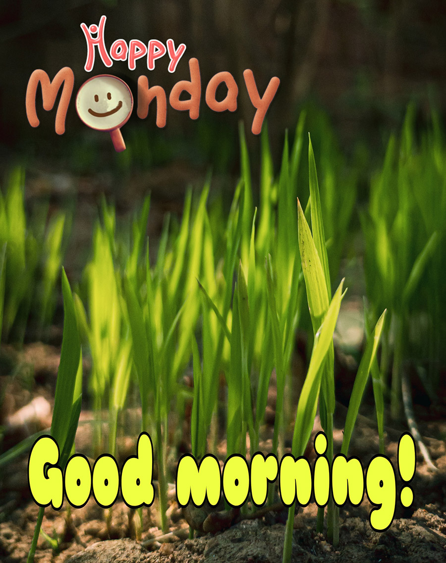 Good morning imonday image with new grass