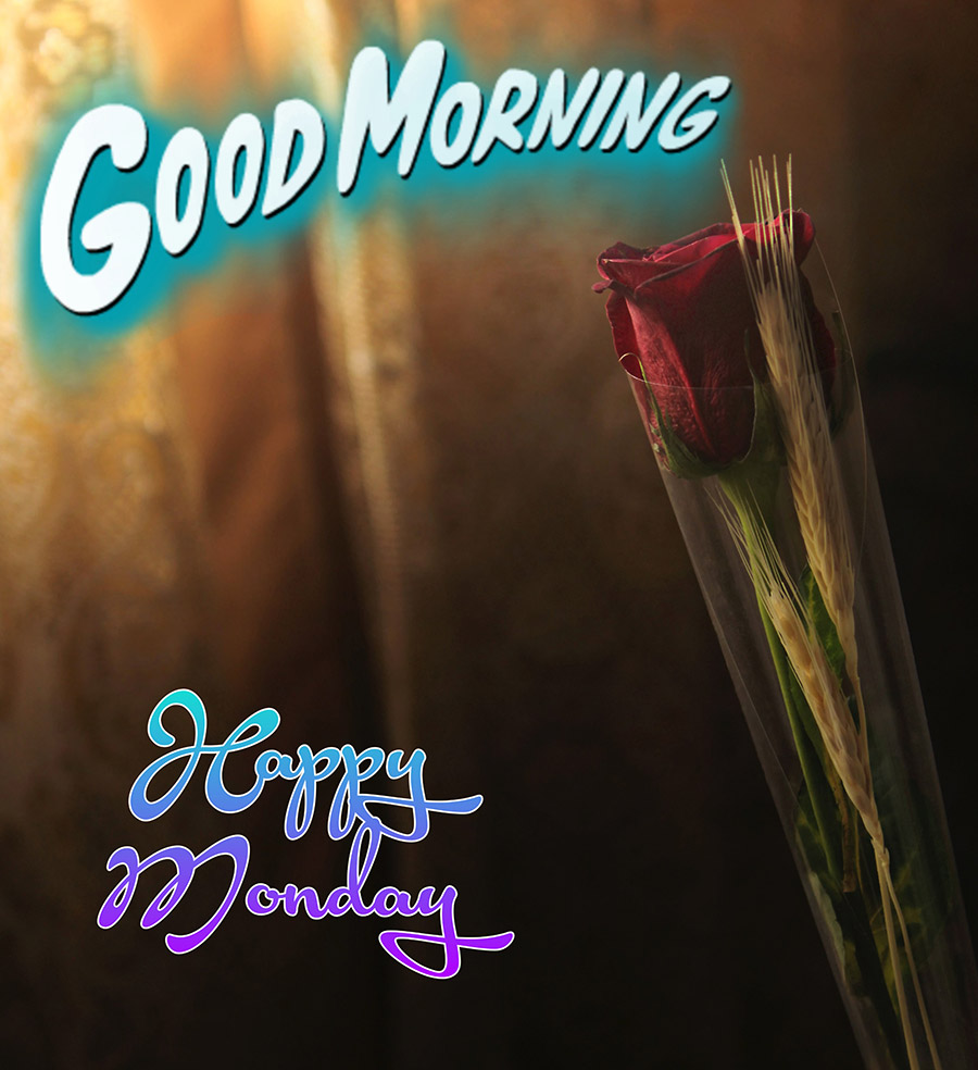 Good morning monday image with red rose, dried grass flowers