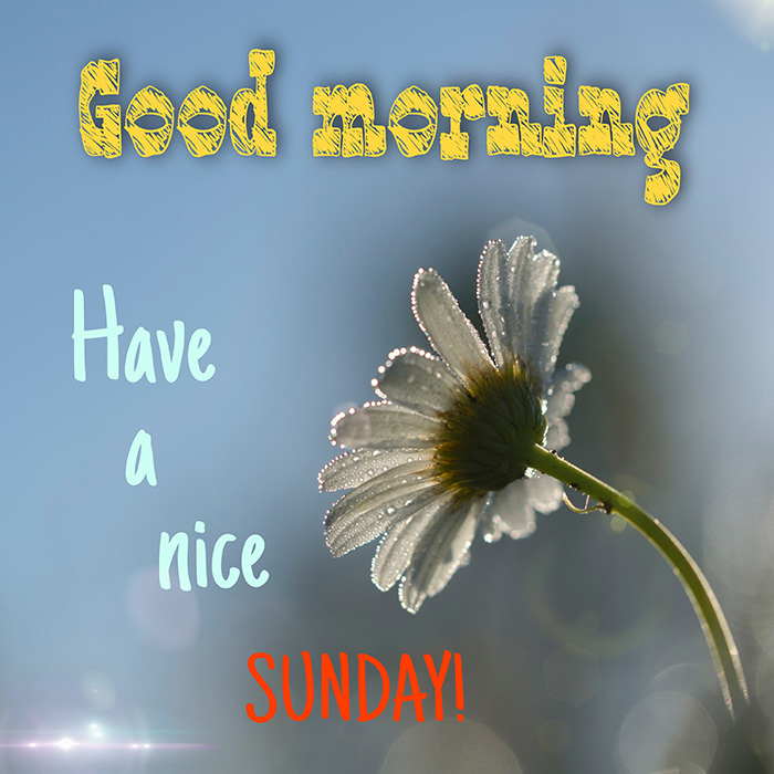 good morning have a nice sunday 2