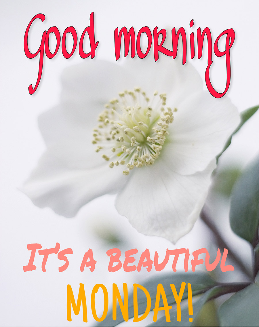 White flower and good morning monday wish