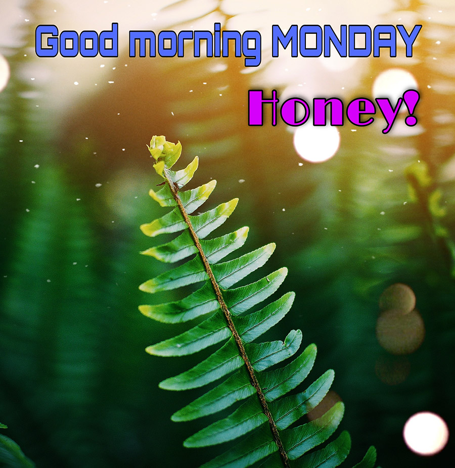 Good morning monday image with Fern
