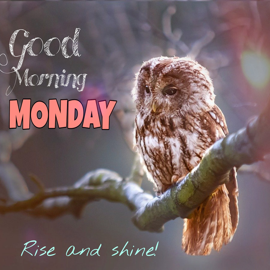 Good morning monday image with owl