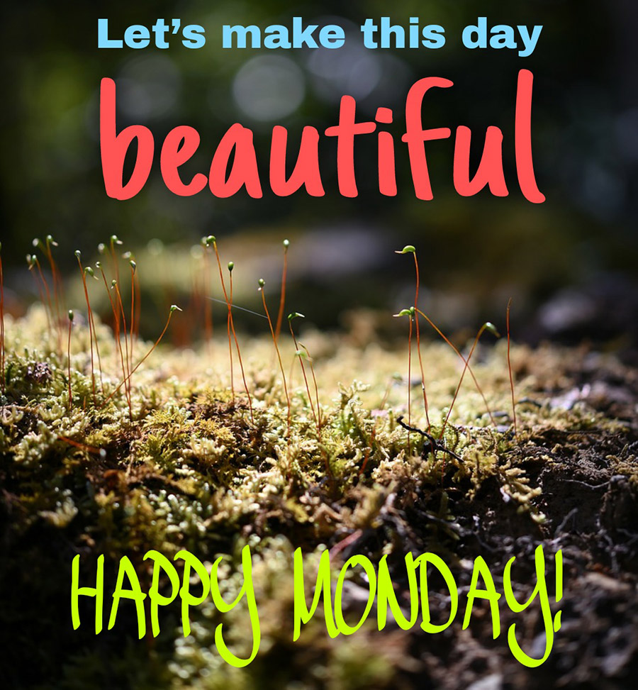 Good morning monday image with green moss
