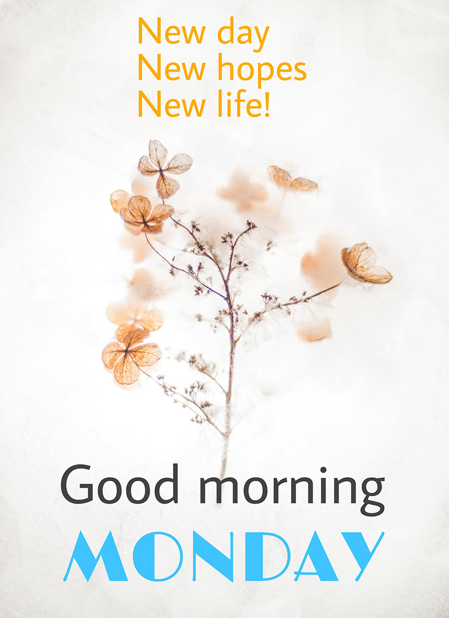 Good morning image with flowers and white background