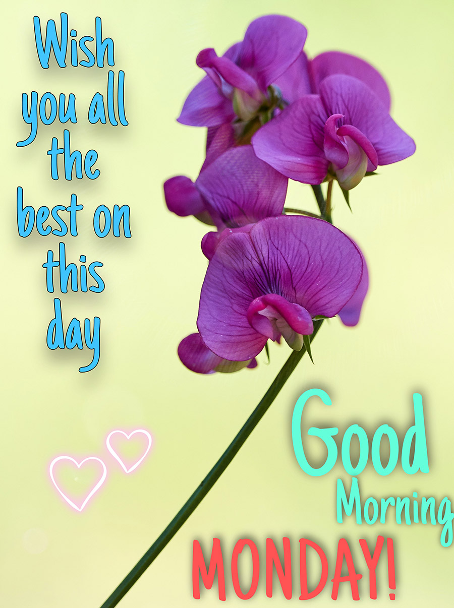 Good morning monday with orchid