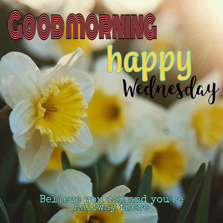 Good morning wednesday image with yellow flowers