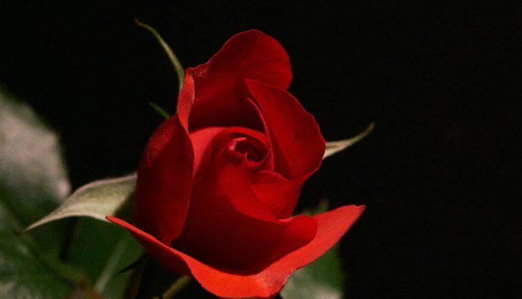 blessed-day-with-rose