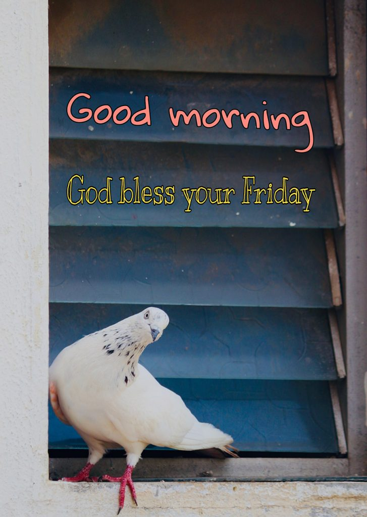 Good morning friday image with dove is sitting on the window
