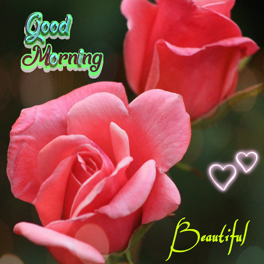 Good morning beautiful image with pink roses