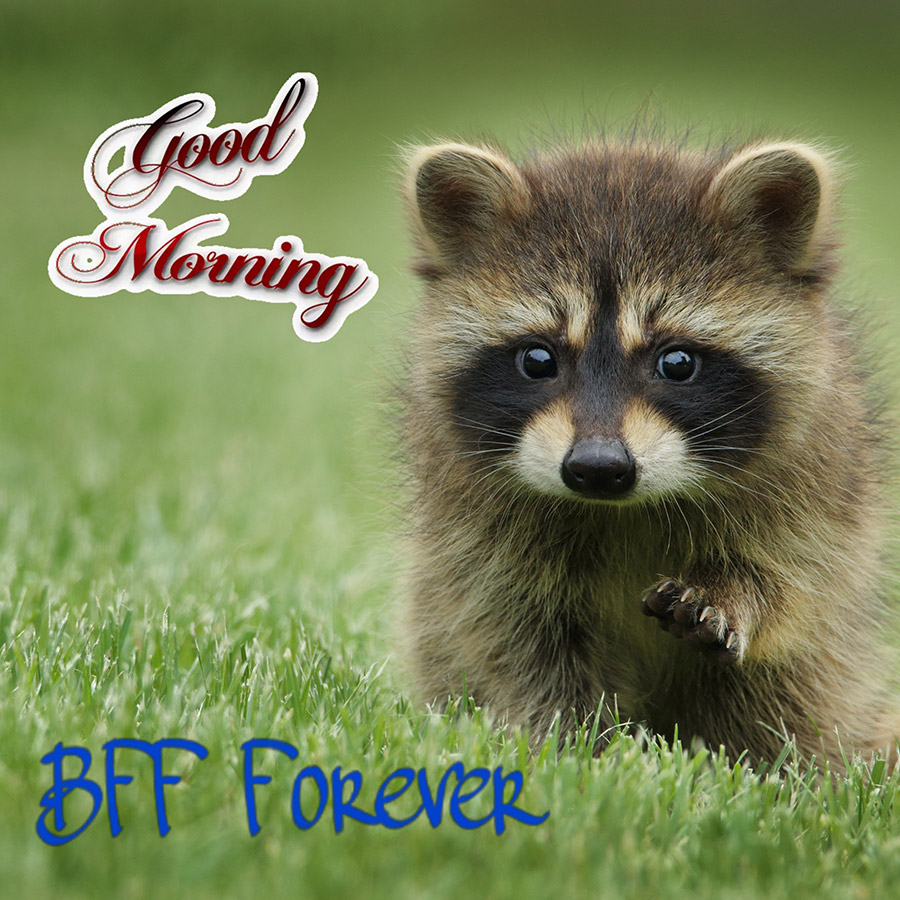 Good morning friend image with cute racoon