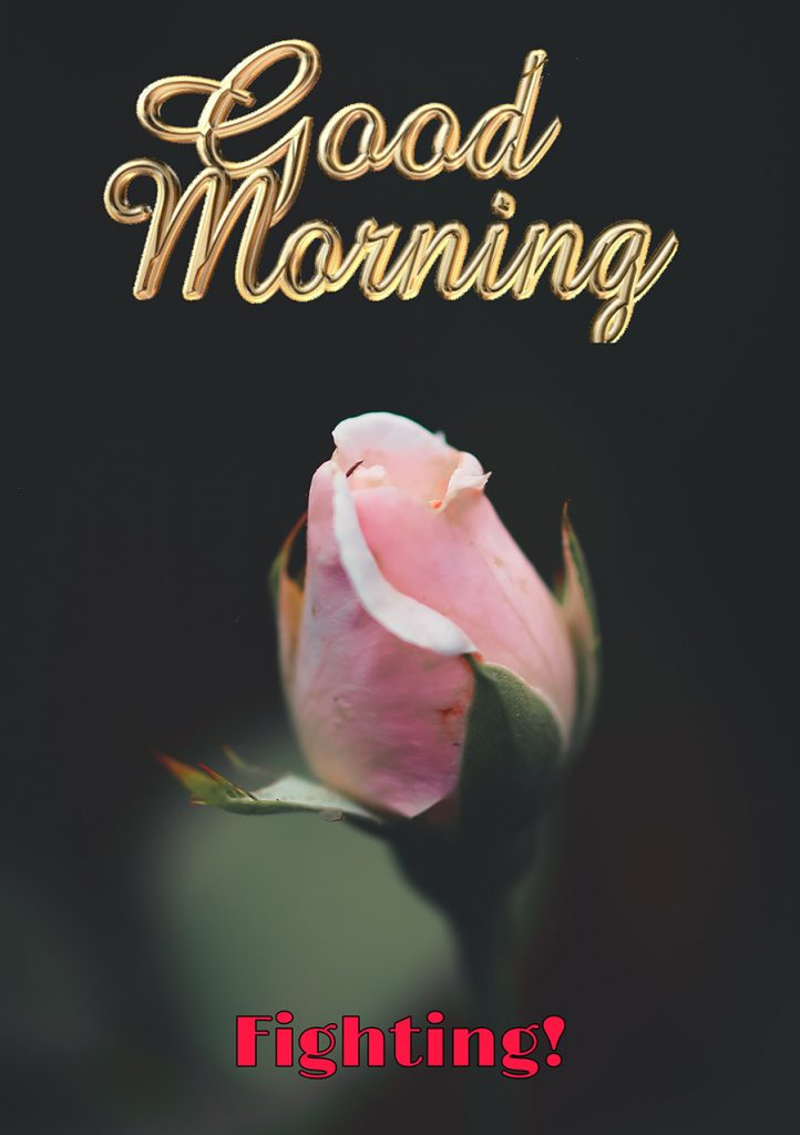 Good morninf fighting image with rose bud