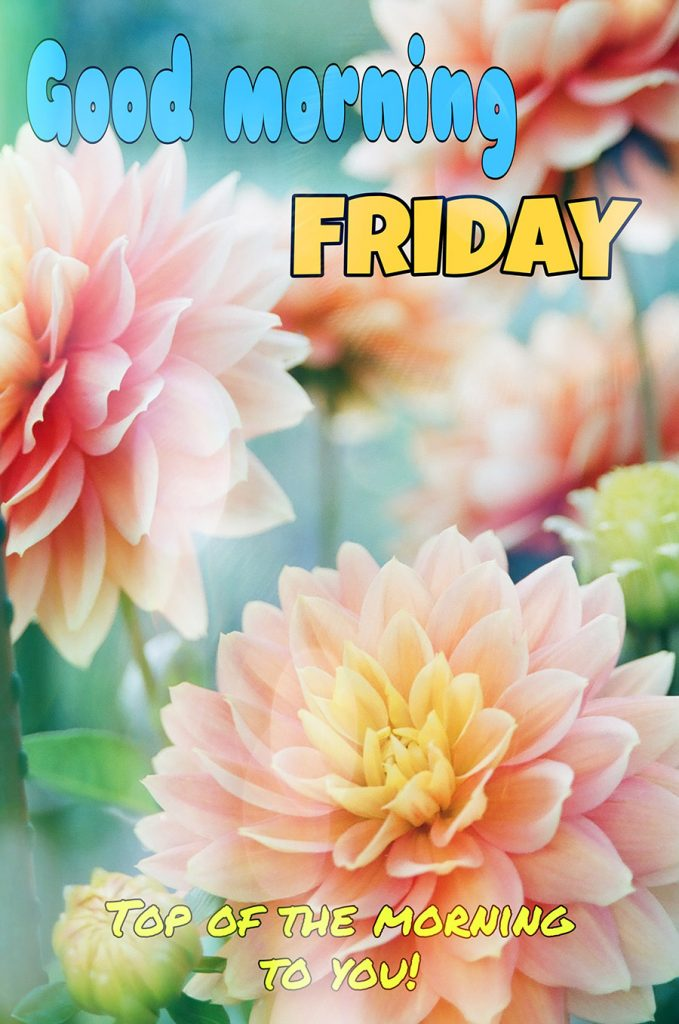 Good morning friday image with Dahlia flowers