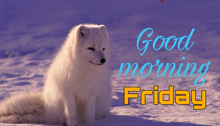 good-morning-friday-with-fox
