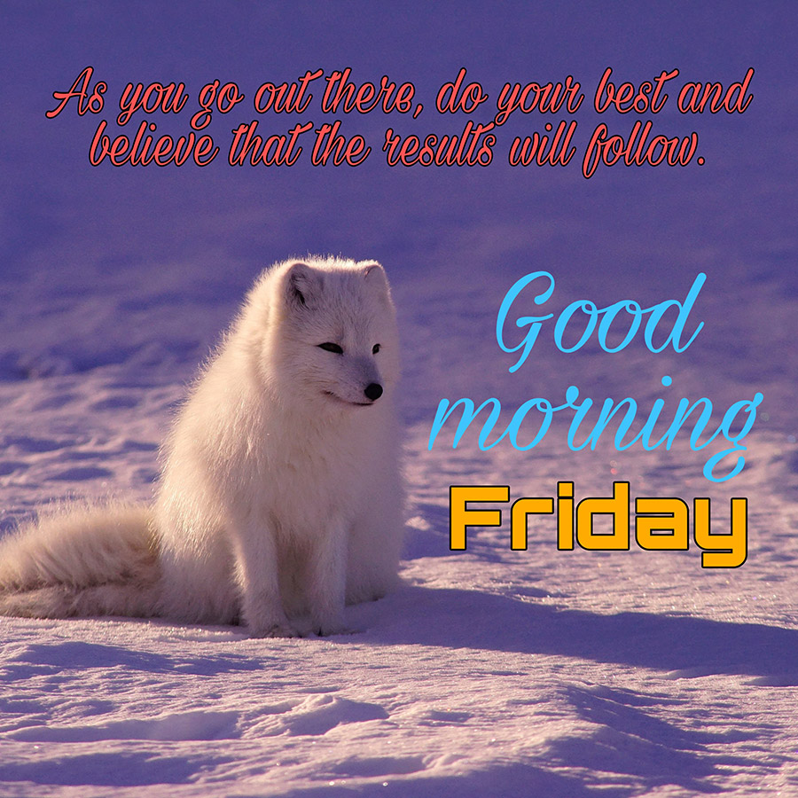 Good morning friday image with snow fox