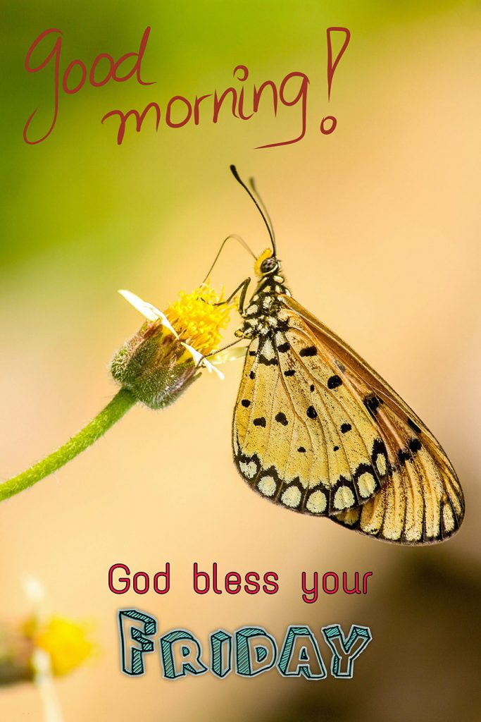 Good morning friday image with butterfly