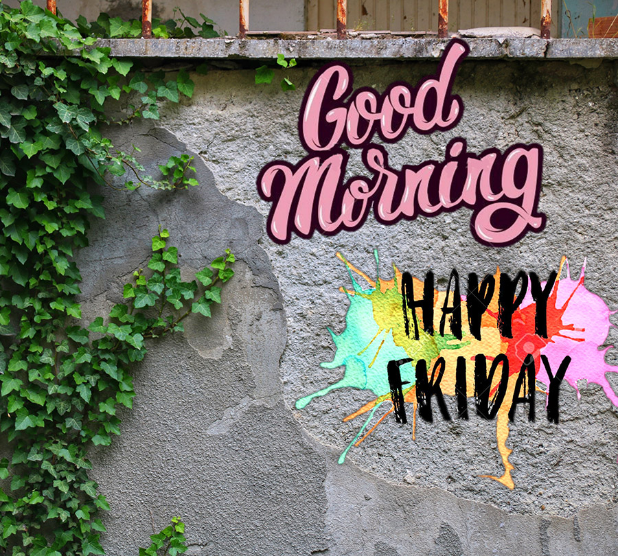 Good morning friday image with wall, vines