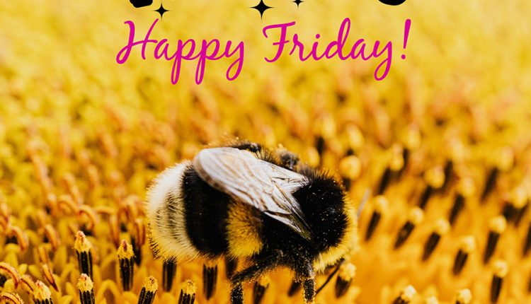 good-morning-happy-friday-wishing-you-a-peaceful-day