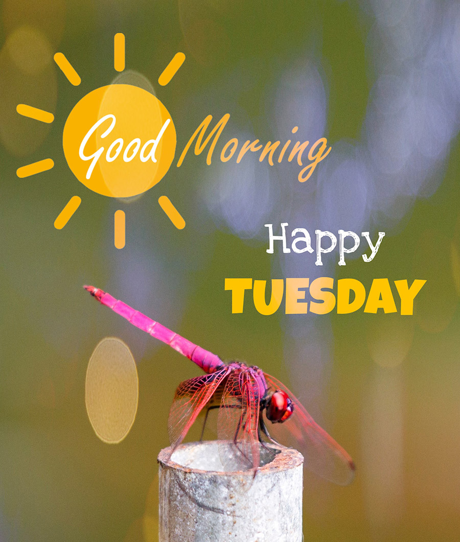 Good morning tuesday image with dragonfly perched on an iron stake