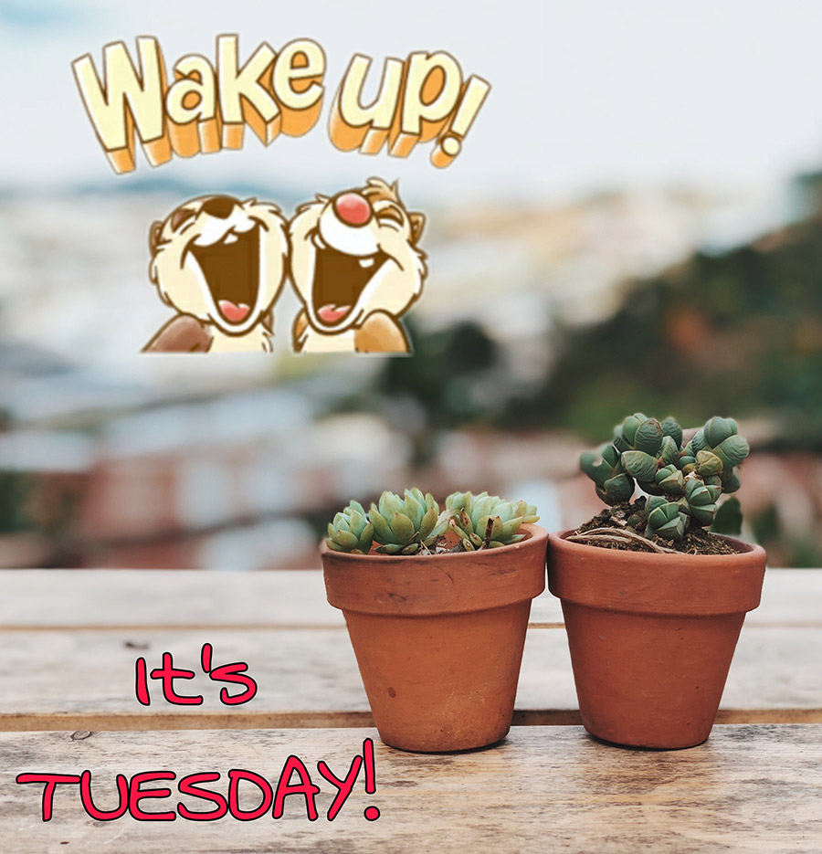 Good morning tuesday image with 2 succulent pots