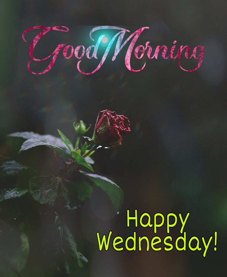 Good morning wednesday image with flower in the rain