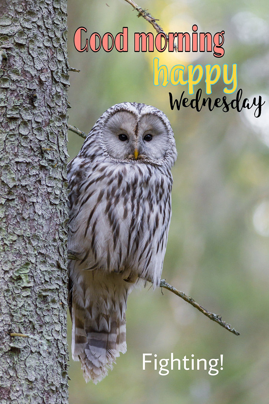 Good morning wednesday image with owl