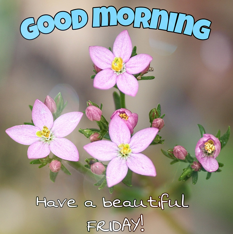 Good morning friday image with pink flowers