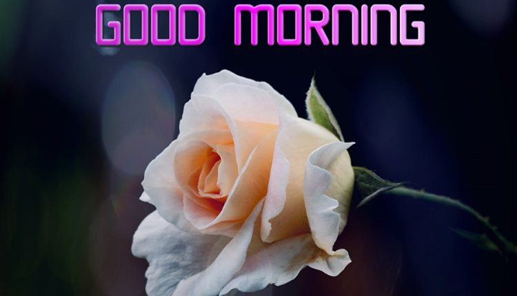 good-morning-have-a-lovely-day