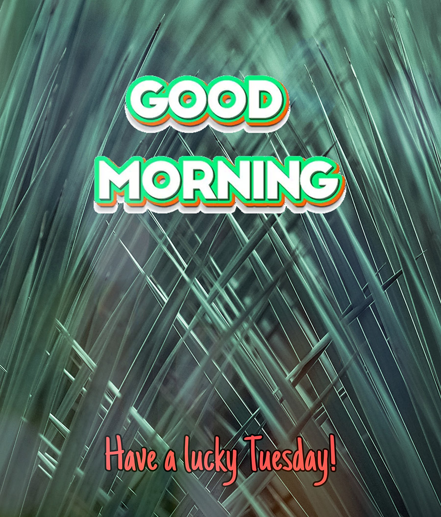 Good morning tuesday image with pointed leaves