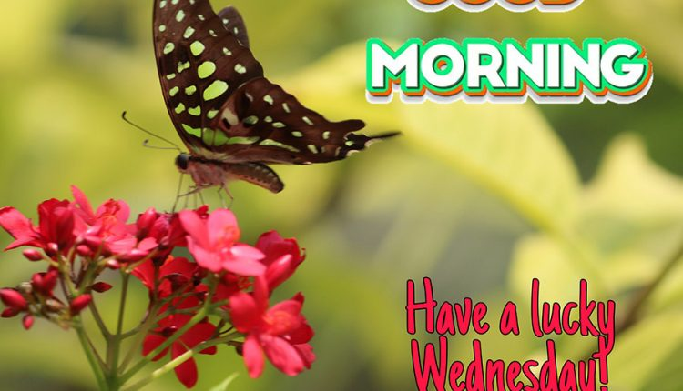 good-morning-have-a-lucky-wednesday