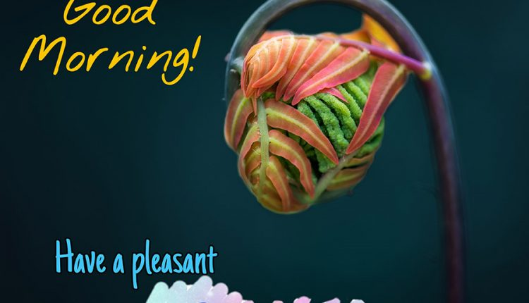 good-morning-have-a-pleasant-saturday-1