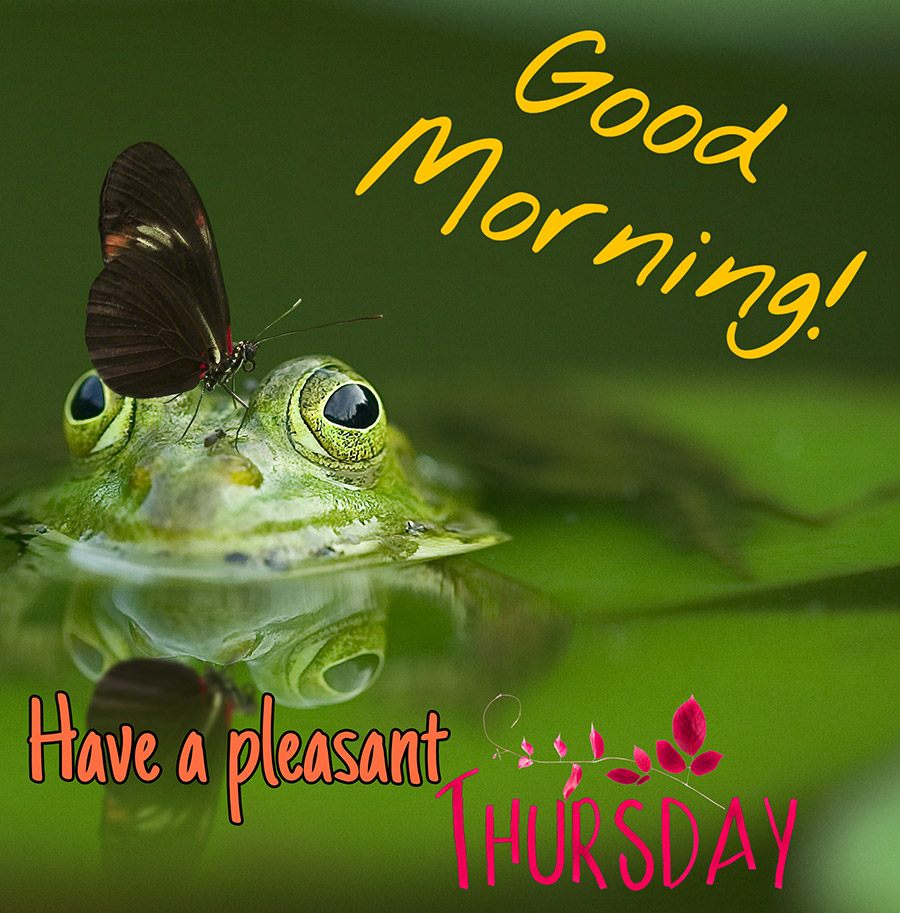 Good morning thursday image with a butterfly perched on a frog's head