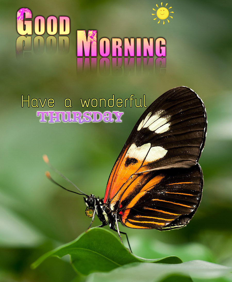 Good morning thursday image with beautiful butterfly