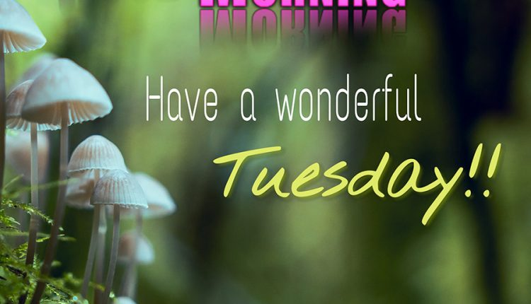 good-morning-have-a-wonderful-tuesday
