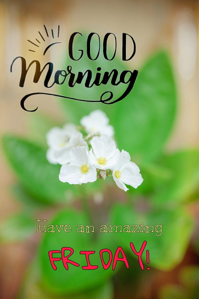 Good morning friday image with white flowers