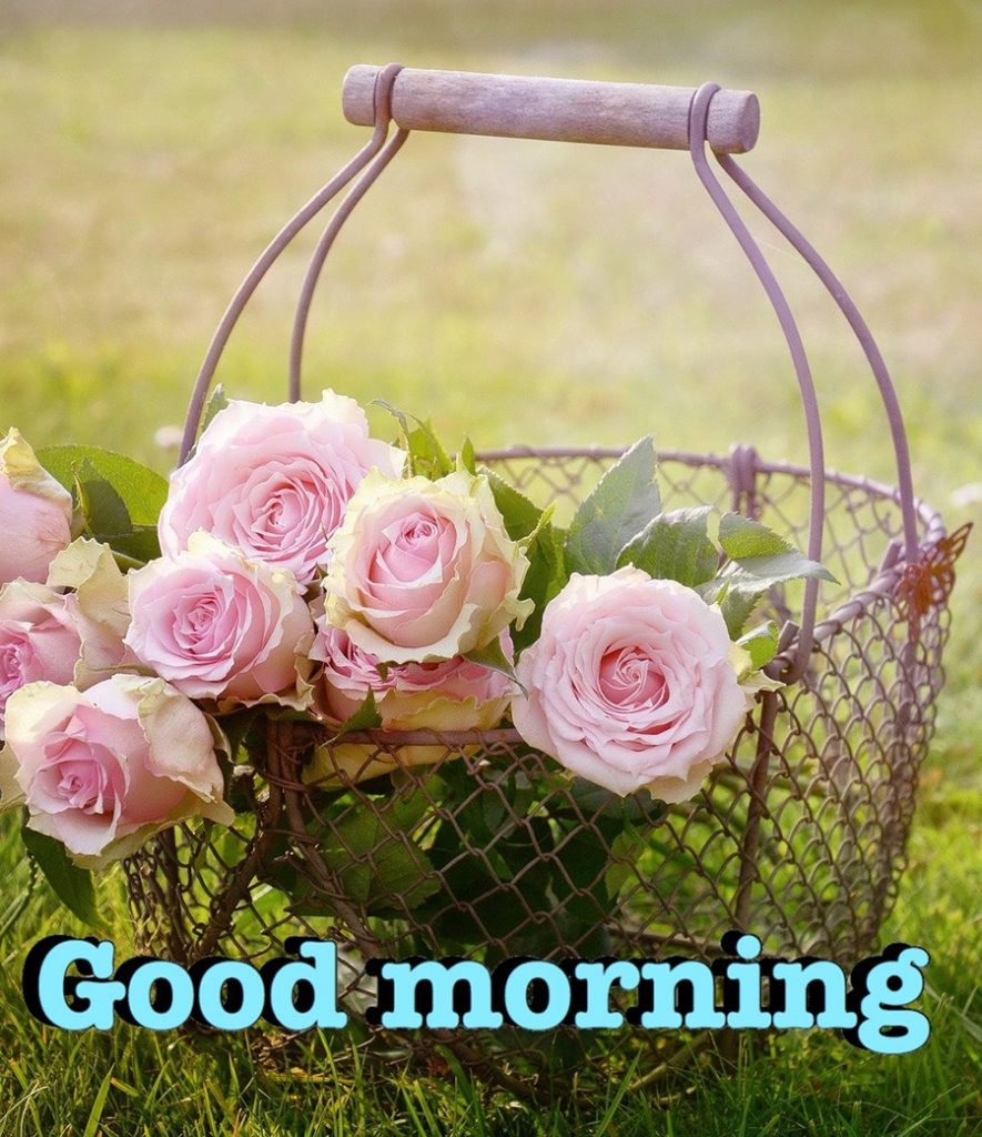 Good morning image with roses basket