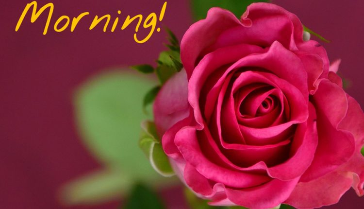 good-morning-image-with-beautiful-rose