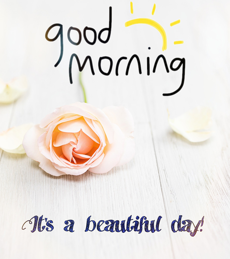 Good morning - It's a beautiful day with rose