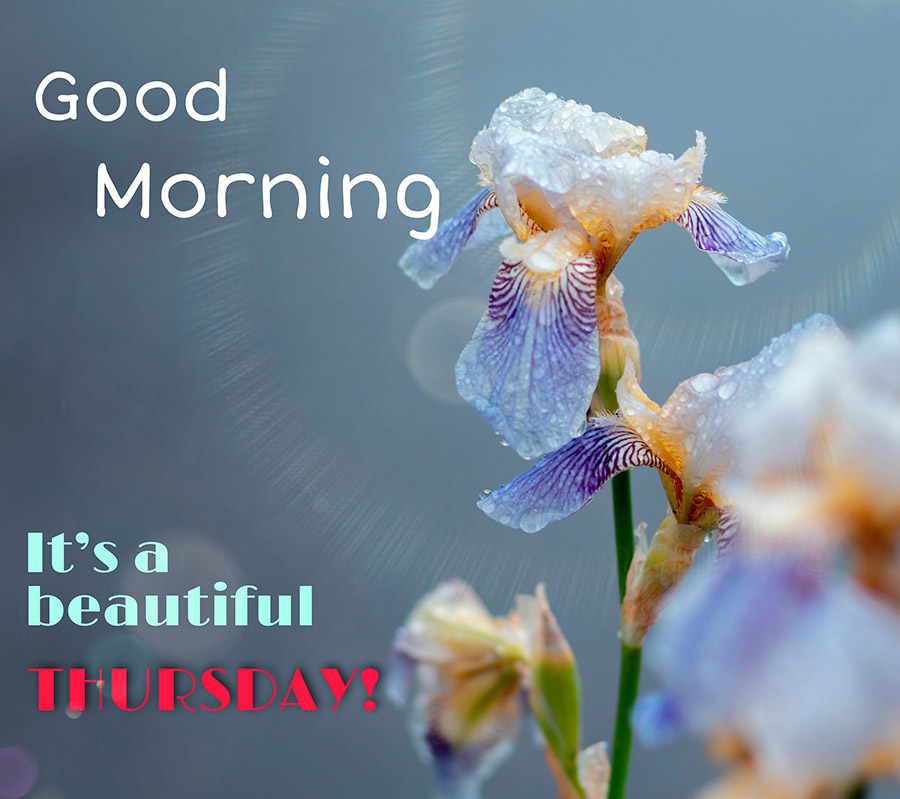 Good morning thursday image with flowers in the rain