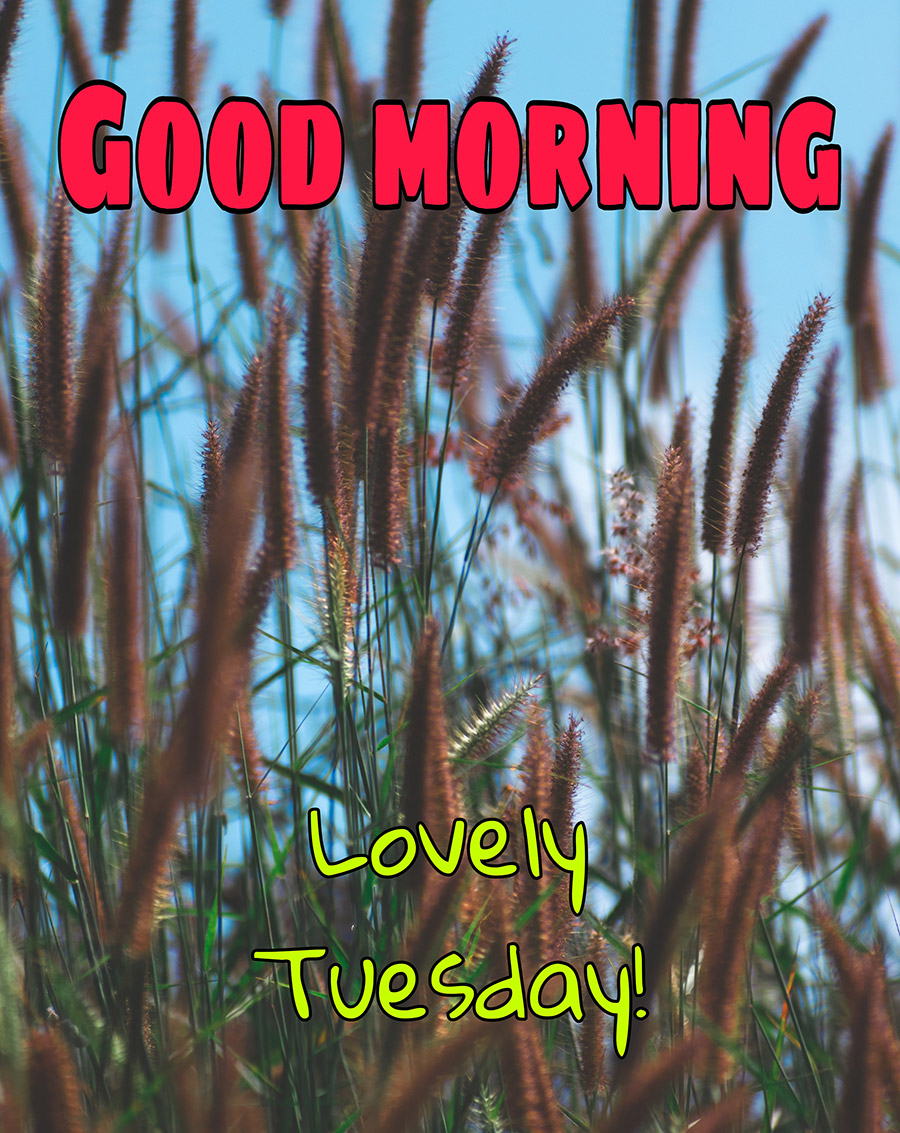 Good morning tuesday image with weeds