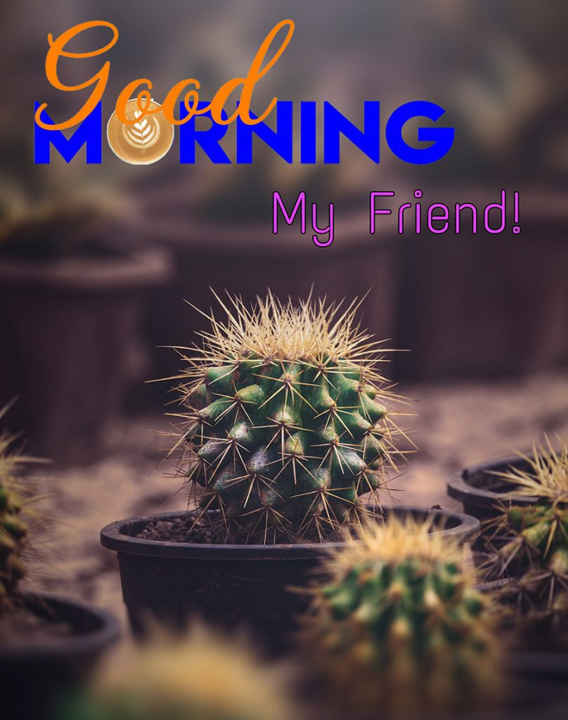 Good morning friend image with cactus