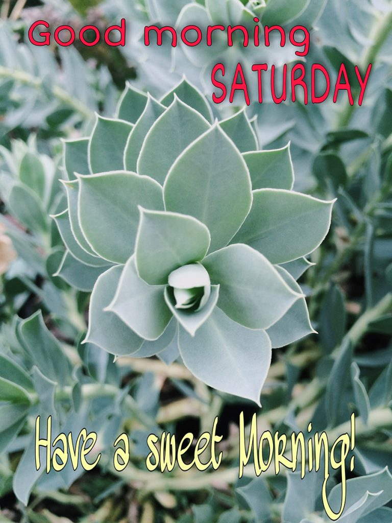Good morning saturday image with leaf