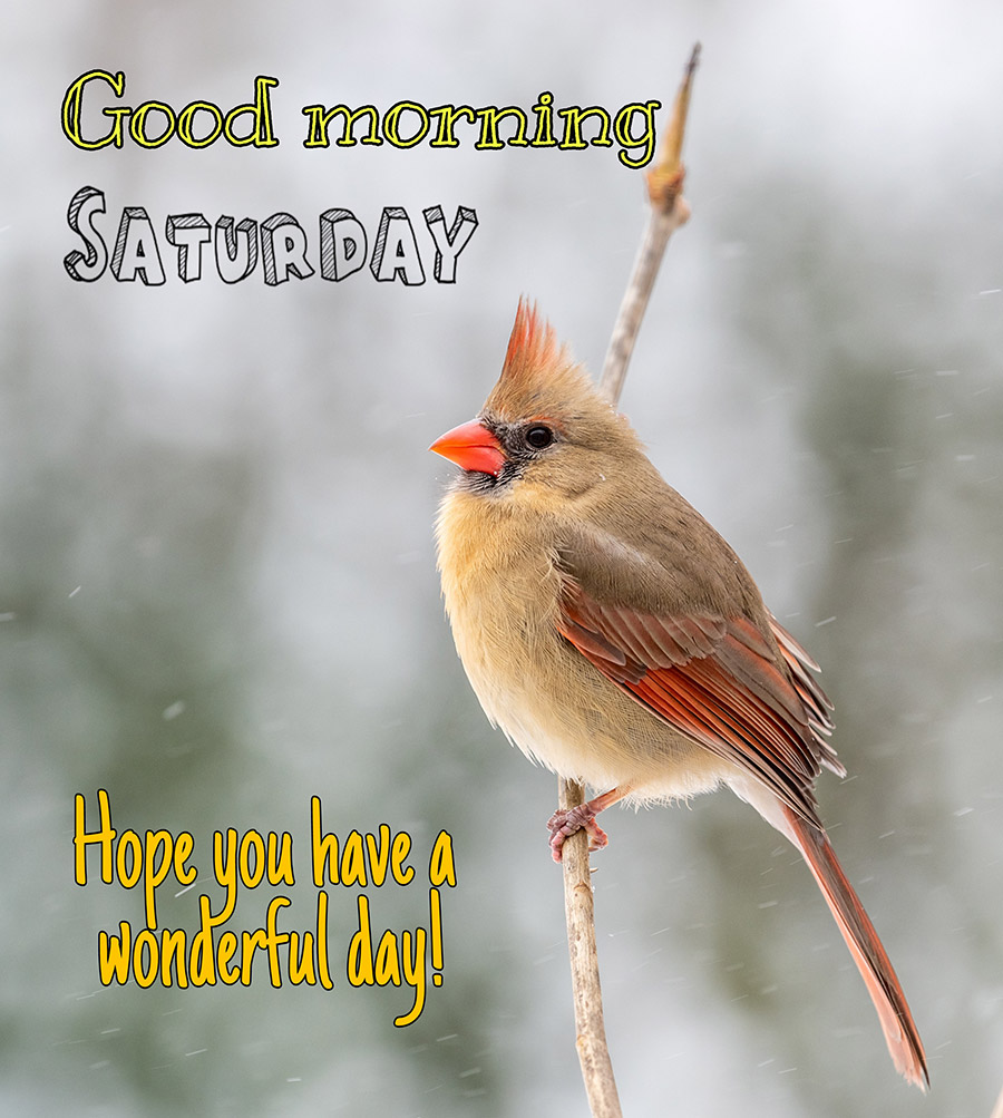 Good morning saturday image with angry bird