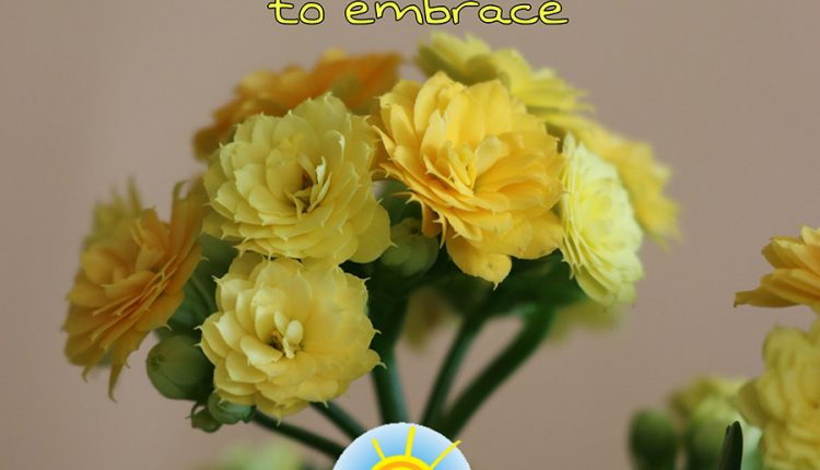 good-morning-saturday-with-yellow-flowers