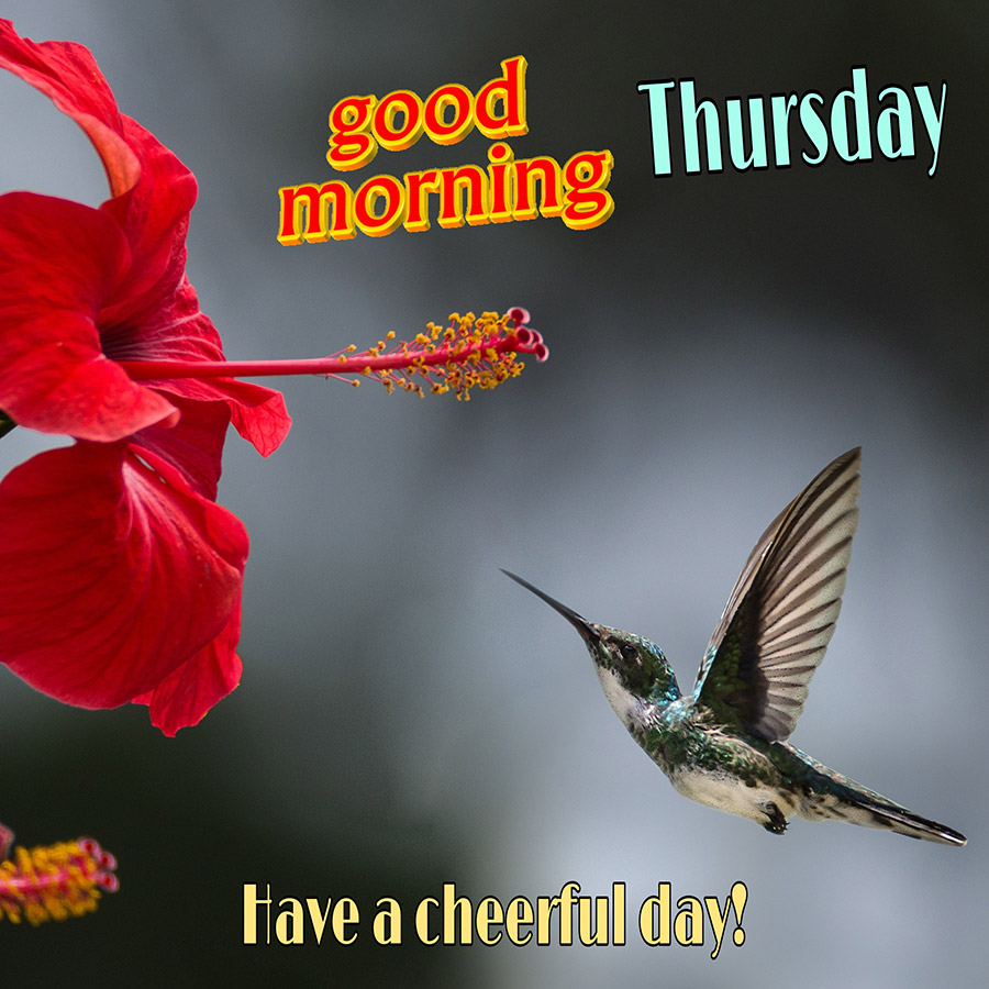 Good morning thursday image with flower and hummingbird